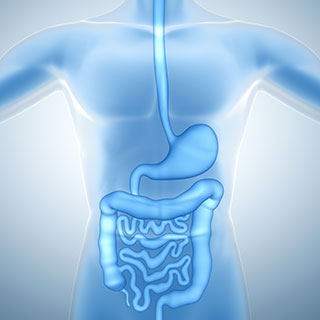 Image of human digestive system