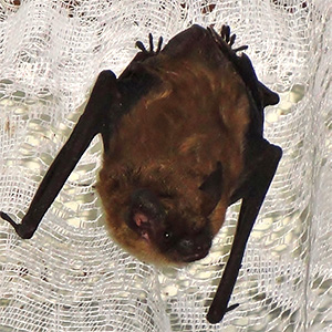 Photo of a bat on a net