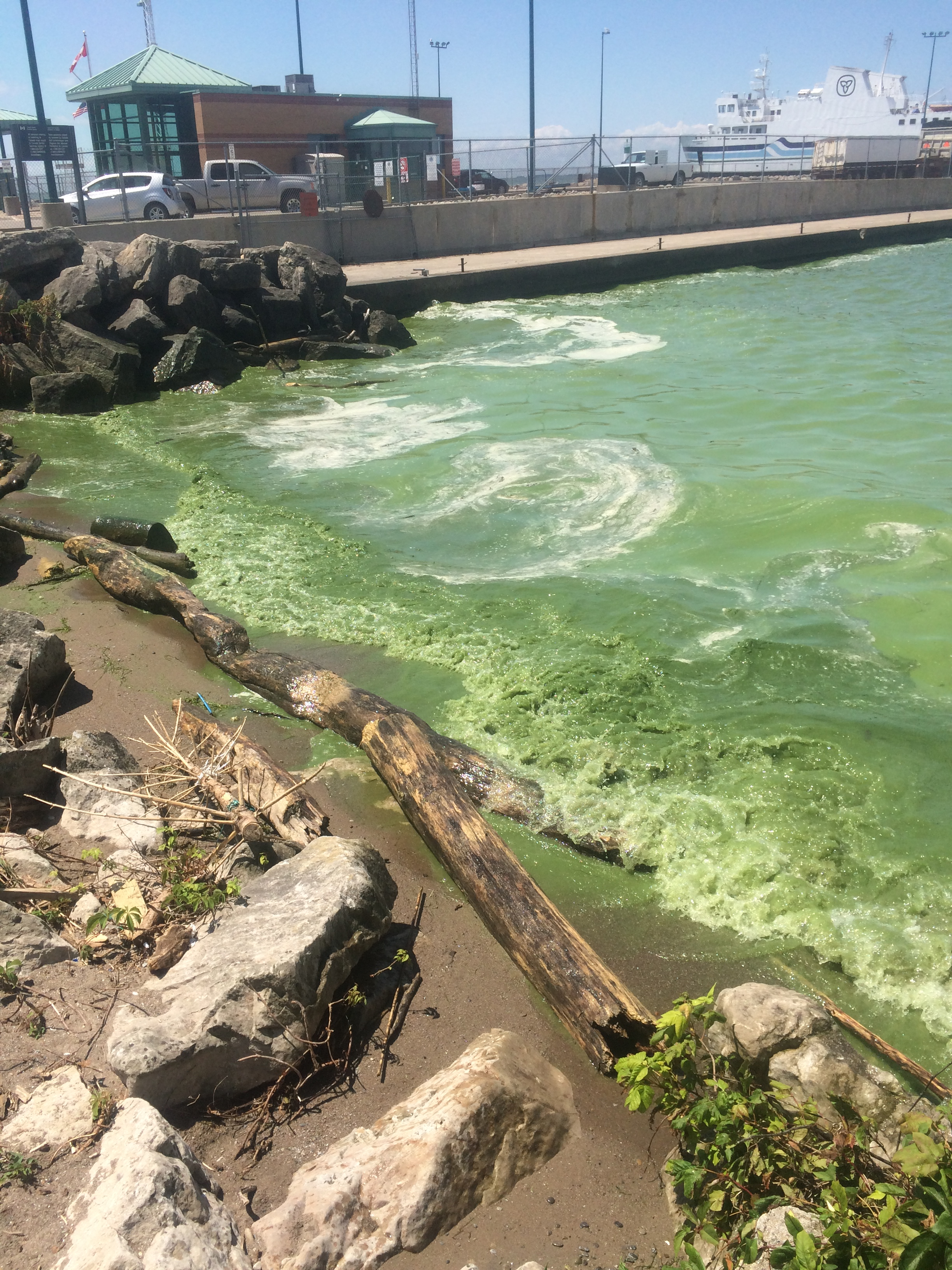 Photo of Blue-Green Algae bloom
